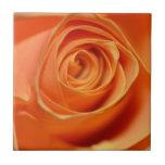 Color de rosa anaranjado en cierre para arriba azulejo cerámica
