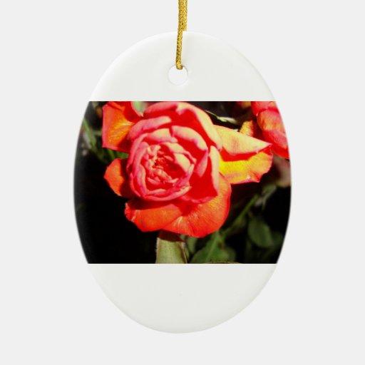 color de rosa anaranjado en el ovorn oscuro ornamento para reyes magos