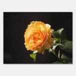 color de rosa anaranjado en la luz del sol