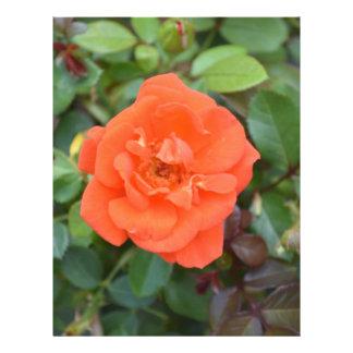 Color de rosa anaranjado folleto 21,6 x 28 cm