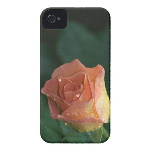 Color de rosa anaranjado Case-Mate iPhone 4 protector