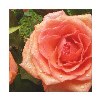 Color de rosa anaranjado imponente impresiones de lienzo