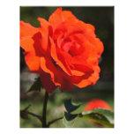 Color de rosa anaranjado membrete a diseño