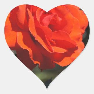 Color de rosa anaranjado pegatina en forma de corazón