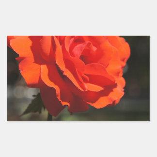 Color de rosa anaranjado pegatina rectangular