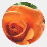 Color de rosa anaranjado pegatina redonda