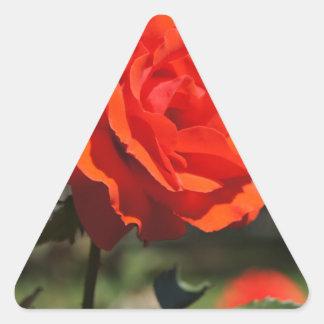 Color de rosa anaranjado pegatina triangular