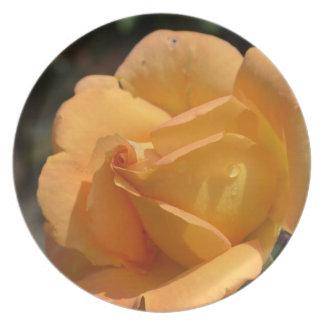 Color de rosa anaranjado plato