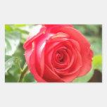 Color de rosa anaranjado rectangular altavoces