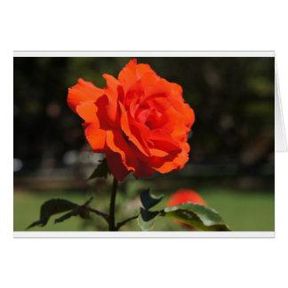 Color de rosa anaranjado tarjeta de felicitación