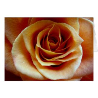 Color de rosa anaranjado tarjeta pequeña