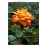 Color de rosa anaranjado tarjetas