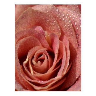 Color de rosa antiguo de las macros postal