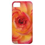 Color de rosa ardiente iPhone 5 funda