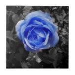 Color de rosa azul azulejos