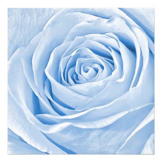Color de rosa azul claro delicado de la foto fotografías