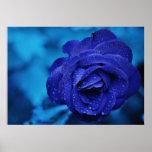 Color de rosa azul con descensos de rocío posters
