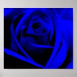 Color de rosa azul de medianoche - poster/impresió