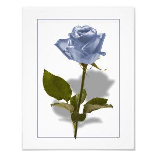 Color de rosa azul del encantamiento arte fotografico