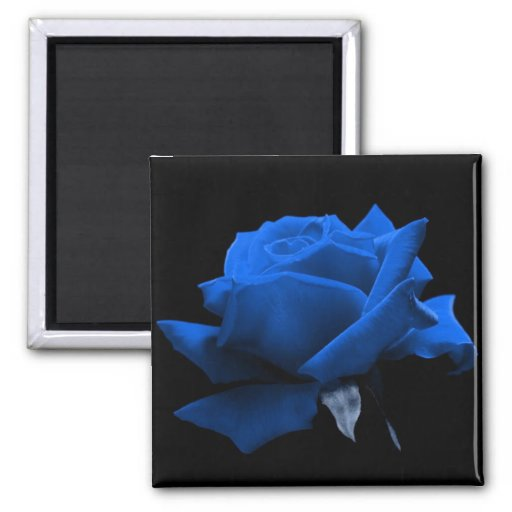 Color de rosa azul imanes de nevera