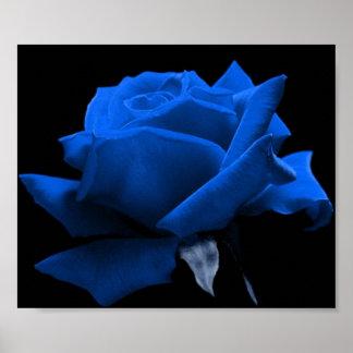 Color de rosa azul impresiones