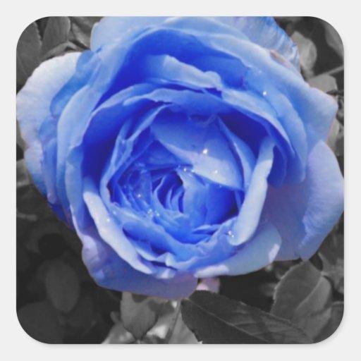 Color de rosa azul pegatinas cuadradases