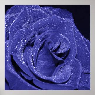Color de rosa azul póster