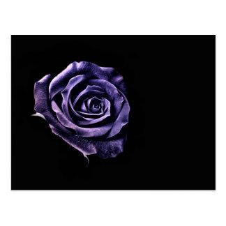 Color de rosa azul postal