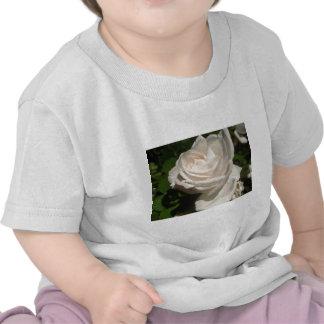 color de rosa, blanco camisetas