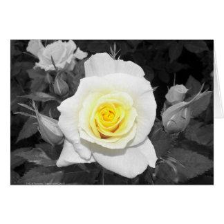 Color de rosa blanco y negro con focal amarillo tarjeta de felicitación