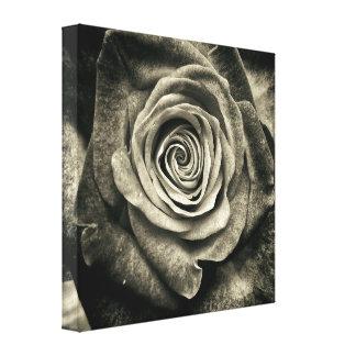Color de rosa blanco y negro impresiones en lienzo estiradas