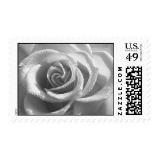 Color de rosa blanco y negro - sello de la flor