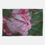 Color de rosa blanco y rosado toalla