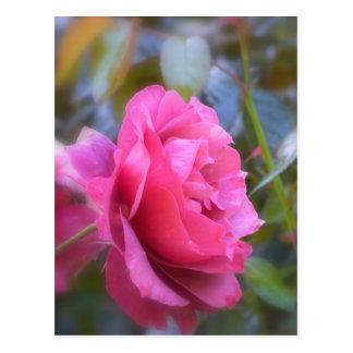 Color de rosa bonito postal