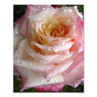 Color de rosa brumoso cojinete