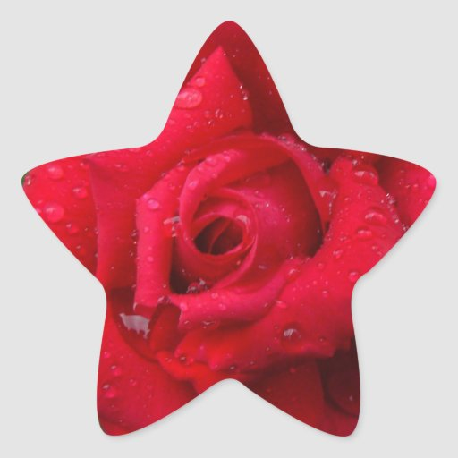 Color de rosa colcomanias forma de estrella