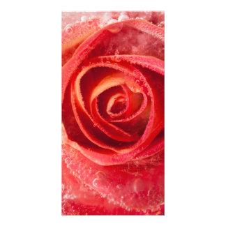 color de rosa congelado tarjetas personales