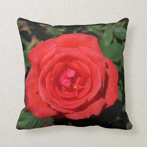 Color de rosa coralino lleno cojines