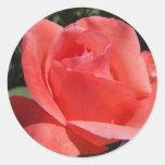 Color de rosa coralino pegatinas redondas