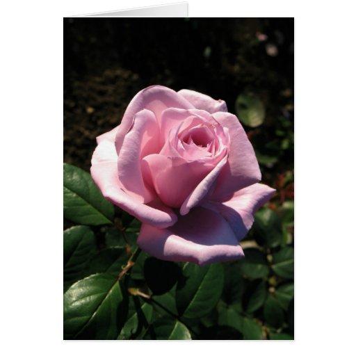 Color de rosa Cumpleaños-Rosado feliz Tarjeta De Felicitación