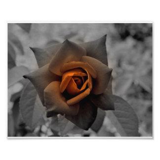 Color de rosa de bronce en el día del mediodía arte con fotos