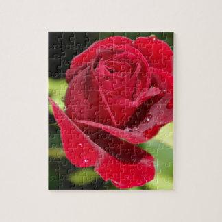 Color de rosa de color rojo oscuro hermoso puzzle
