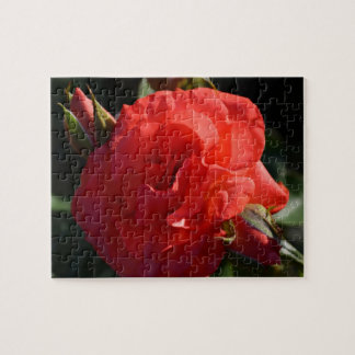 Color de rosa de color salmón en el amanecer puzzle