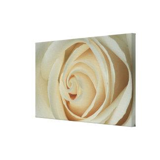 Color de rosa de marfil blanco impresión en lona