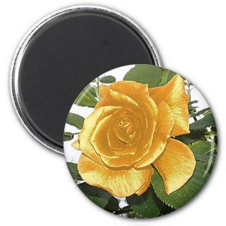 color de rosa de oro imán redondo 5 cm