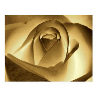 Color de rosa de oro postales