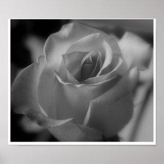 Color de rosa de plata poster
