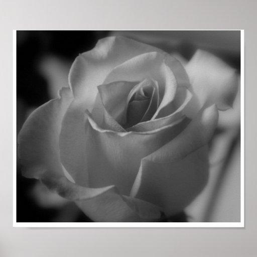Color de rosa de plata póster