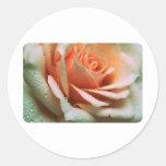 Color de rosa delicado pegatina redonda