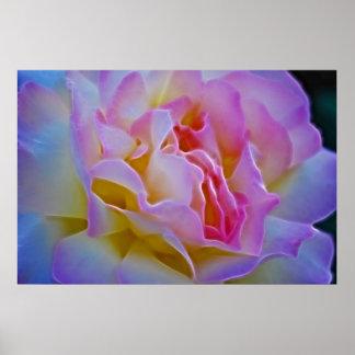 Color de rosa delicioso y significado poster